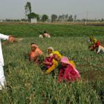 Advanced Farmer – Enriched Farming scheme in Maharashtra