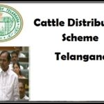 Cattle Distribution Scheme in Telangana
