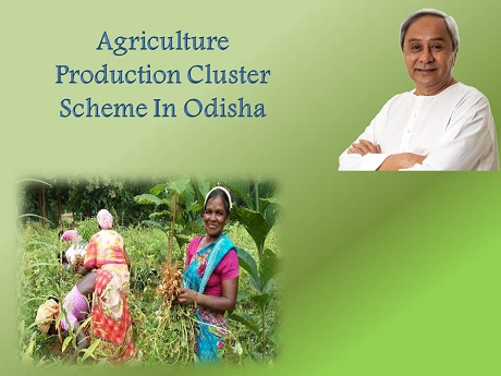 Agriculture Production Cluster Scheme In Odisha